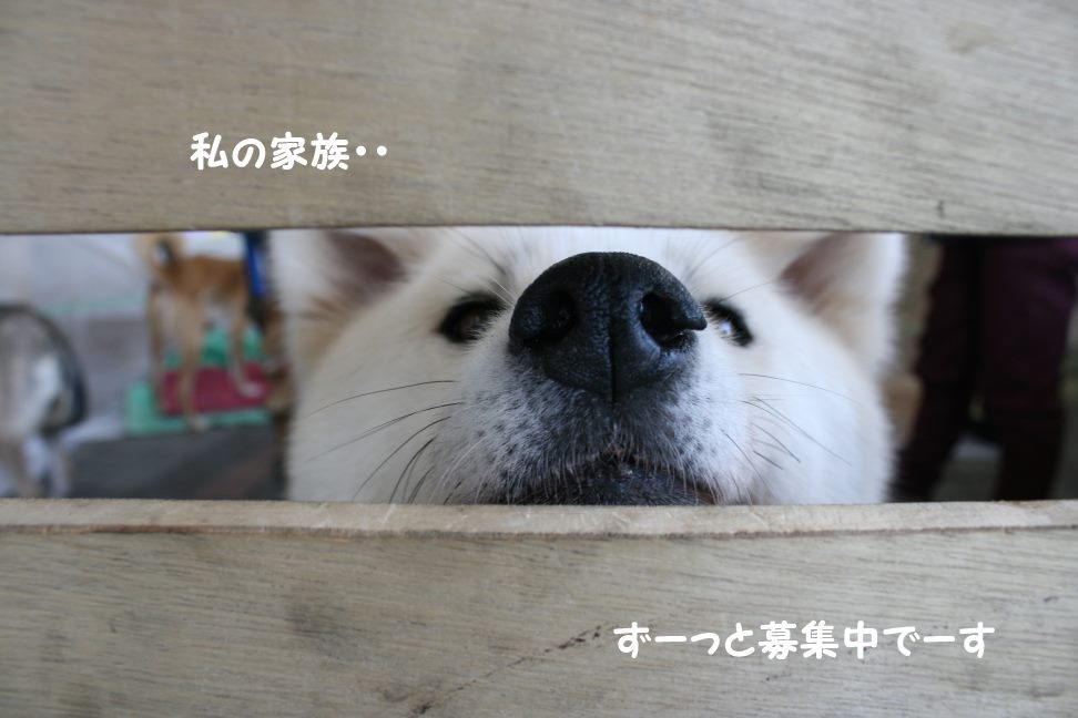 3/27 D&Dさん里親会_f0242002_130447.jpg