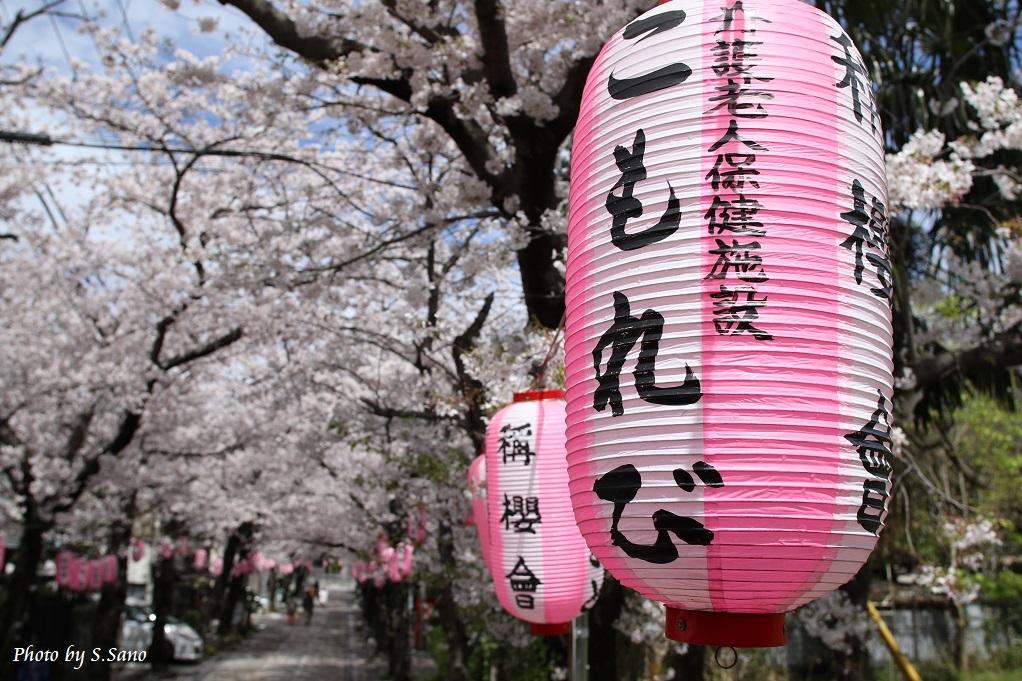 春の称名寺(2016年4月)_b0348205_23262826.jpg