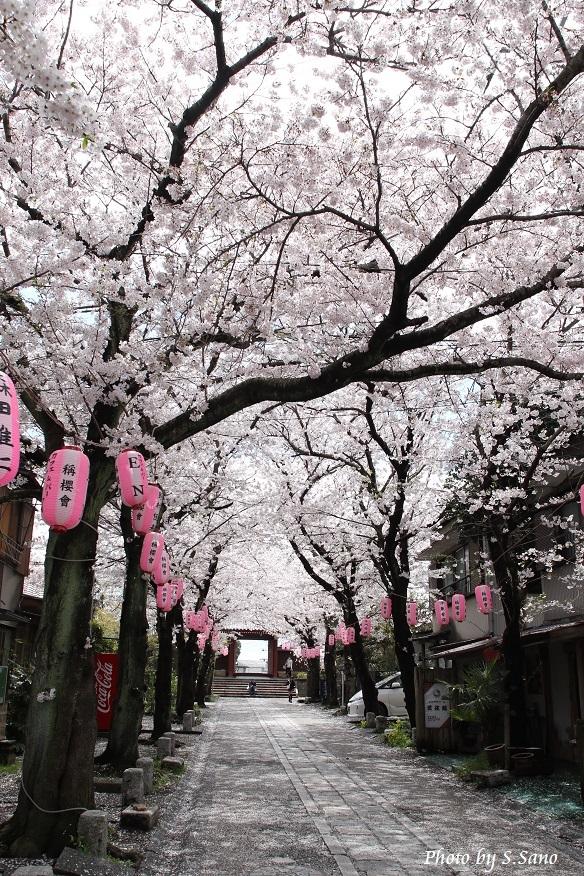 春の称名寺(2016年4月)_b0348205_23263959.jpg