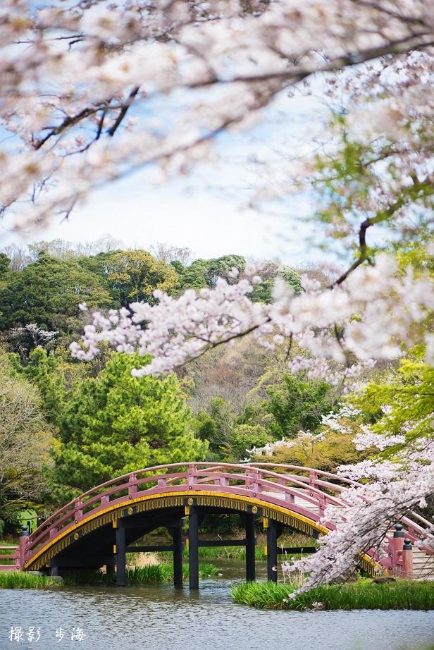 春の称名寺(2016年4月)_b0348205_23445037.jpg