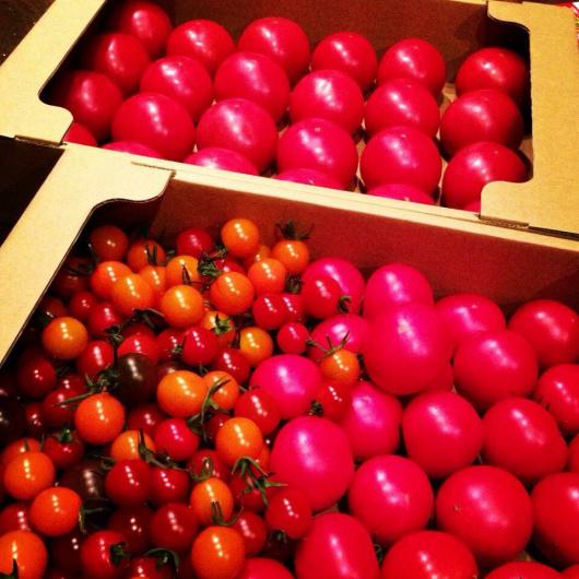 太陽のフルーツトマト販売開始。_f0301305_16303437.jpg