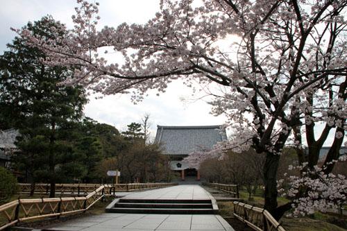 16桜だより32 智積院_e0048413_18245388.jpg