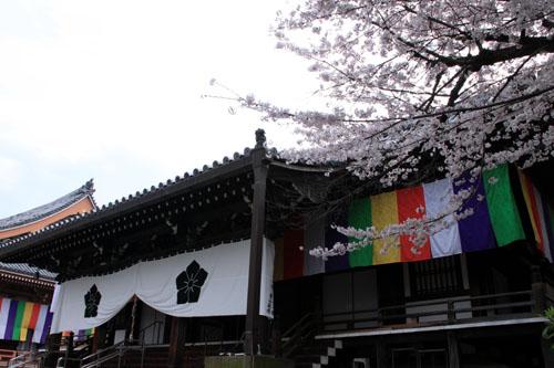 16桜だより32 智積院_e0048413_18253597.jpg
