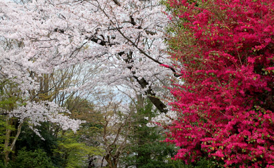 16桜だより32 智積院_e0048413_18254859.jpg
