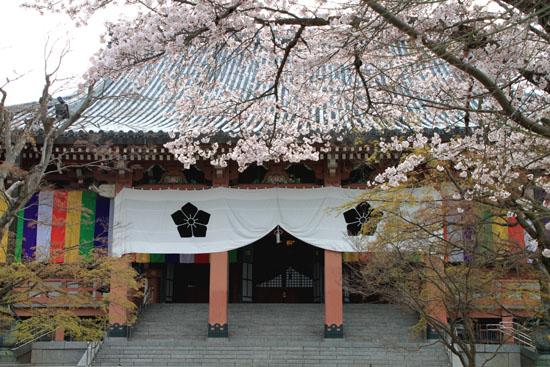 16桜だより32 智積院_e0048413_1825668.jpg