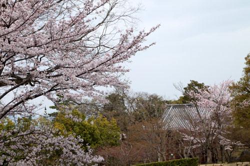 16桜だより32 智積院_e0048413_18261313.jpg