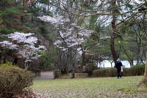 16桜だより33 宝が池_e0048413_18543286.jpg