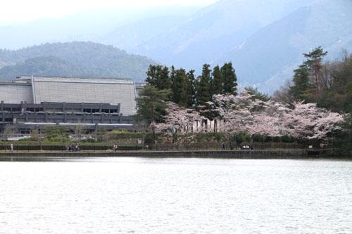 16桜だより33 宝が池_e0048413_1855848.jpg