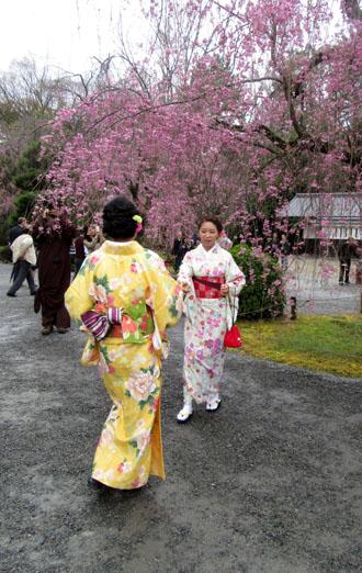 16桜だより34 二条城_e0048413_20475665.jpg