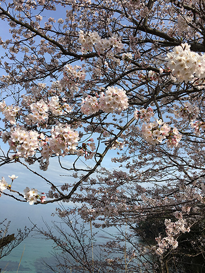 桜見_b0134123_20122886.jpg