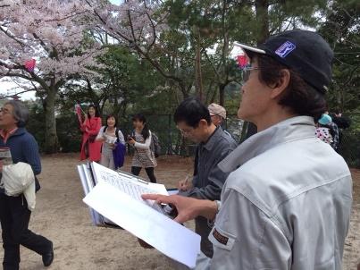 宮島さくら・もみじの会 開花状況調査_f0229523_1712729.jpg