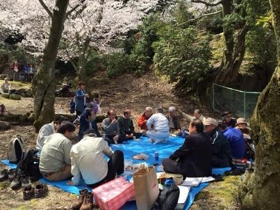 宮島さくら・もみじの会 開花状況調査_f0229523_1751128.jpg