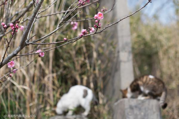 【春の投稿まつり】結果発表①「小さい春、み~つけた!」ギフト券当選者一挙ご紹介!_f0357923_10333313.jpg