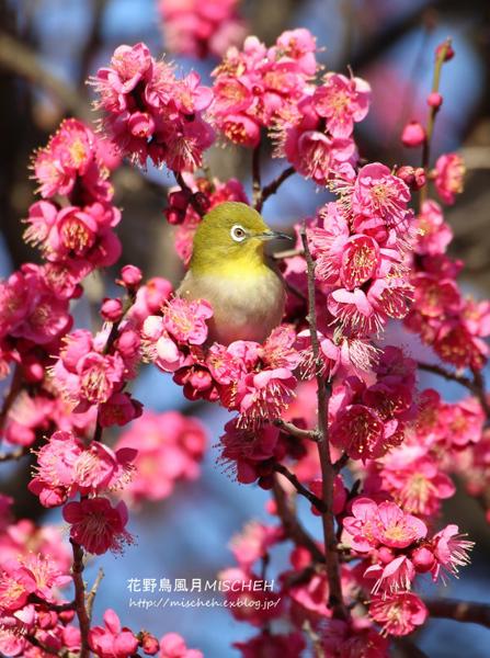 【春の投稿まつり】結果発表①「小さい春、み~つけた!」ギフト券当選者一挙ご紹介!_f0357923_10333369.jpg