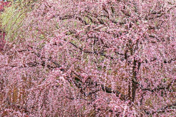 【春の投稿まつり】結果発表①「小さい春、み~つけた!」ギフト券当選者一挙ご紹介!_f0357923_10362685.jpg