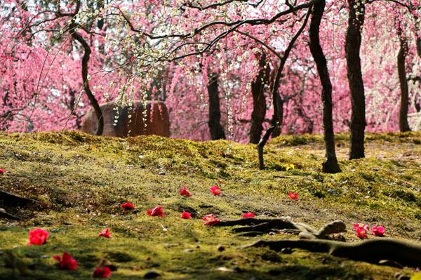 【春の投稿まつり】結果発表①「小さい春、み~つけた!」ギフト券当選者一挙ご紹介!_f0357923_10362784.jpg