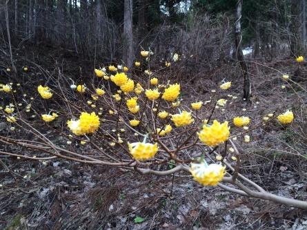 春ですね!_f0101226_21282082.jpg