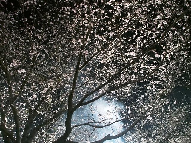夜桜_d0052327_2372190.jpg
