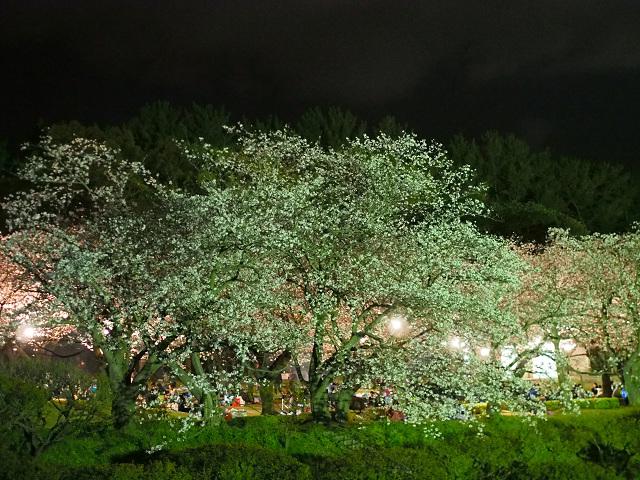 夜桜_d0052327_237883.jpg