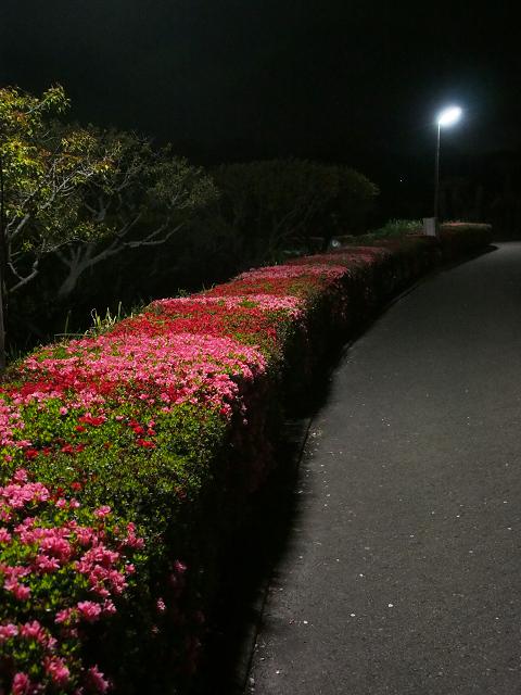 夜桜_d0052327_2381173.jpg
