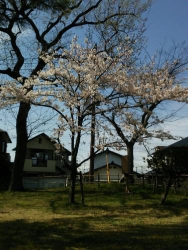 春です!_e0334332_10081121.jpg