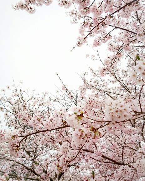 春イロ_c0199544_00024823.jpg