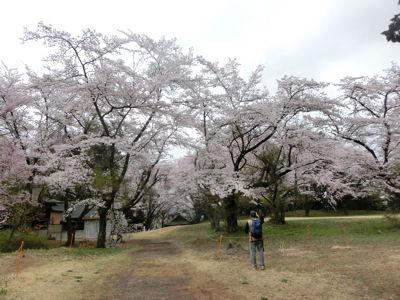 新府の桃・穴山の桜_f0019247_22294142.jpg
