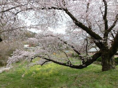 新府の桃・穴山の桜_f0019247_22302273.jpg