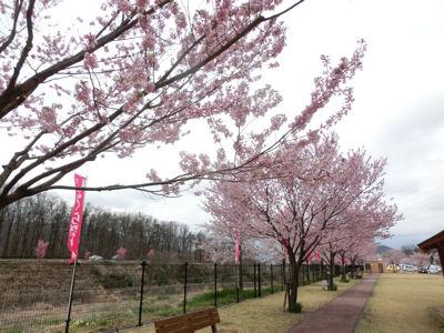 新府の桃・穴山の桜_f0019247_2230833.jpg