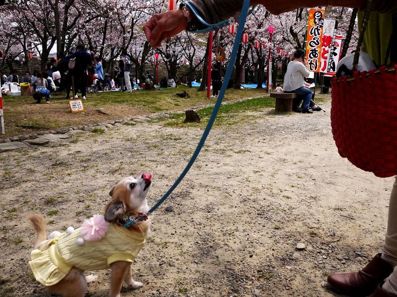 桜咲く和歌山公園にて_b0093754_20314841.jpg