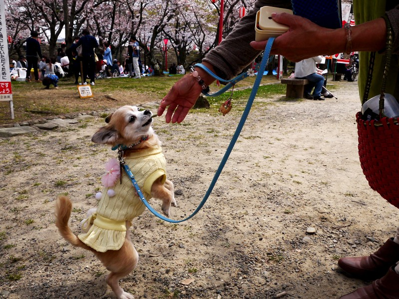 桜咲く和歌山公園にて_b0093754_20315697.jpg