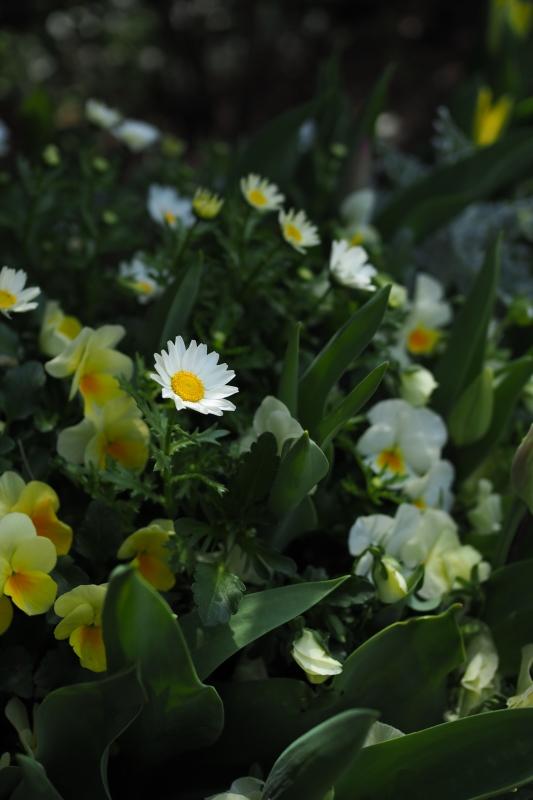 春の足音_a0292060_16524017.jpg