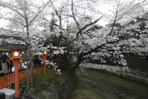 祇園の夜桜_f0205367_18030919.jpg