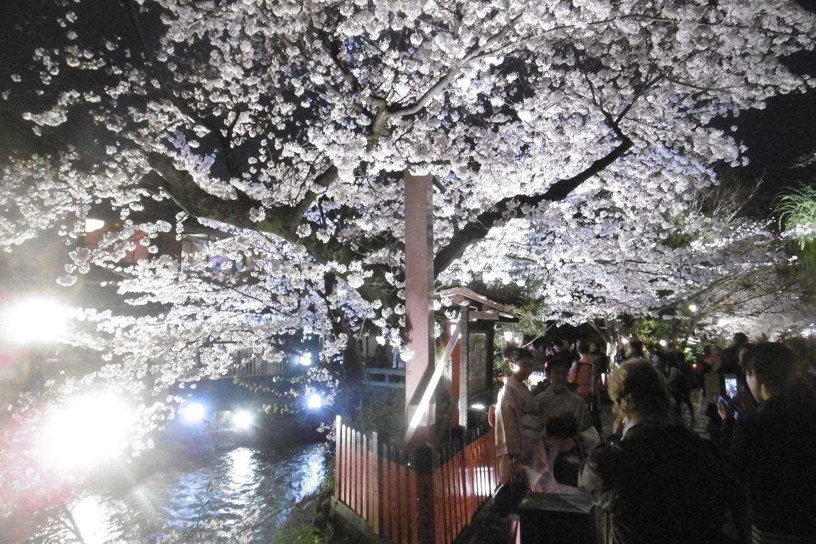祇園の夜桜_f0205367_18155022.jpg