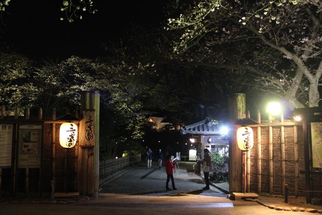 三渓園の夜桜_c0310571_19441118.jpg