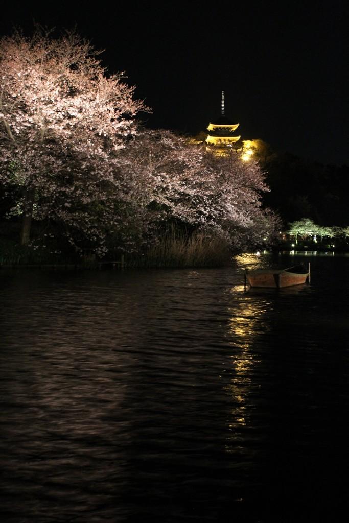 三渓園の夜桜_c0310571_19442434.jpg