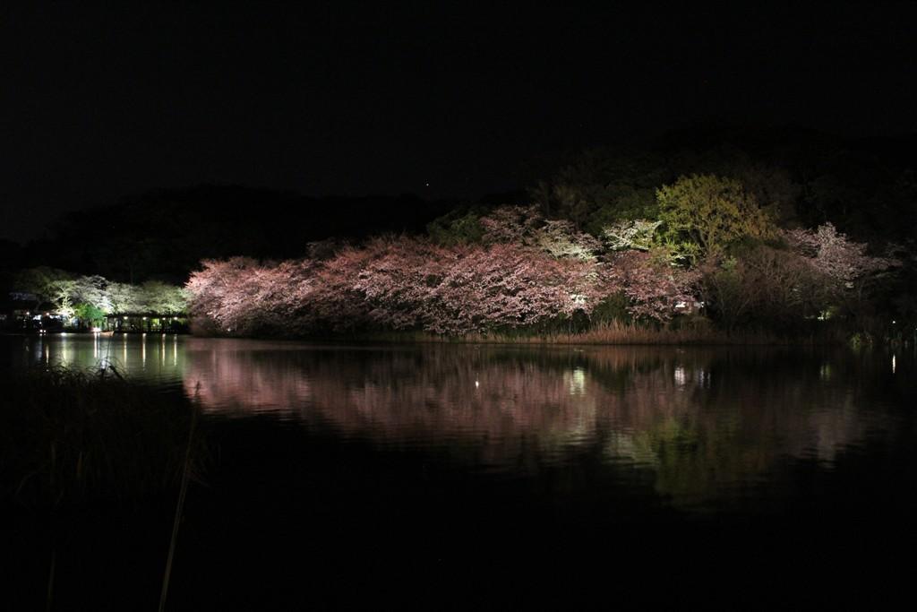 三渓園の夜桜_c0310571_19443243.jpg
