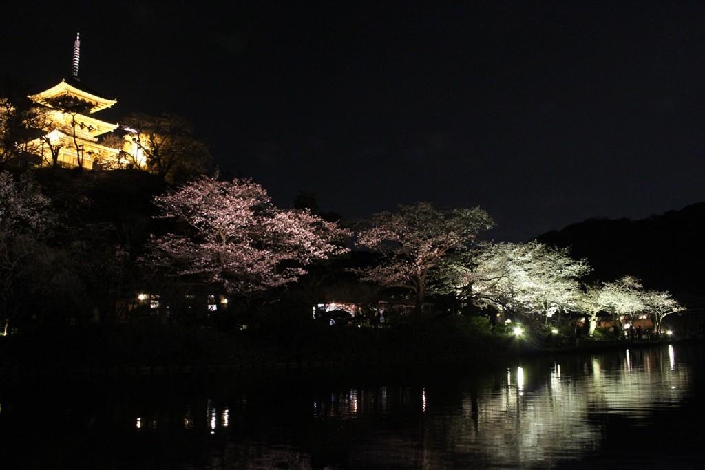 三渓園の夜桜_c0310571_19445581.jpg