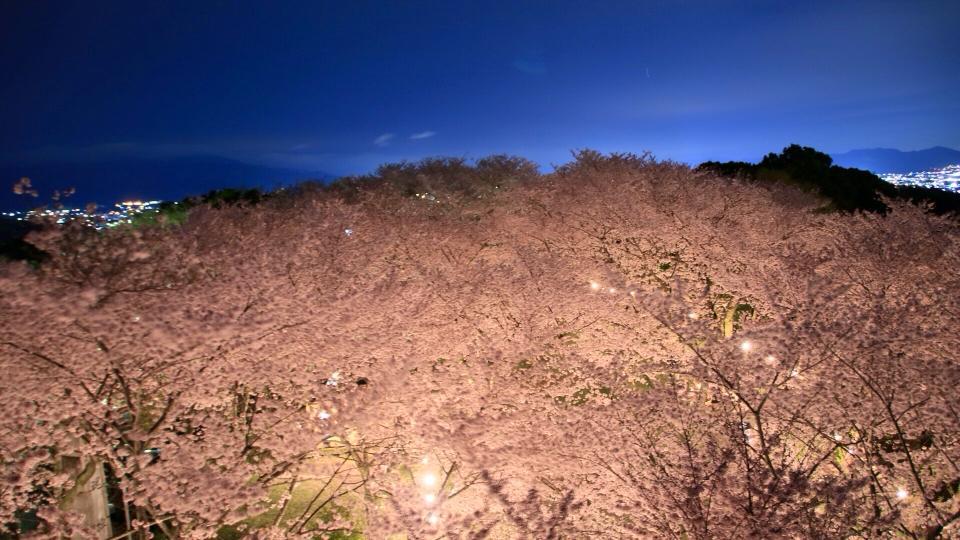 夜桜_c0234975_8512757.jpg