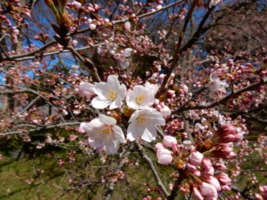 すっかり春だった_e0355177_12160352.jpg