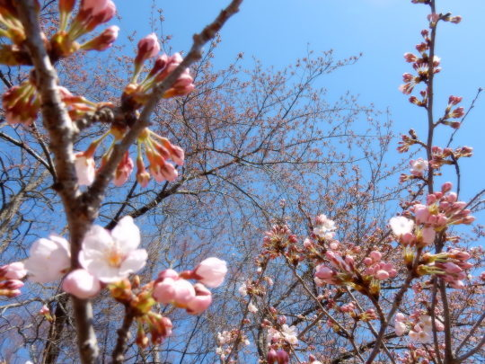 すっかり春だった_e0355177_12161814.jpg