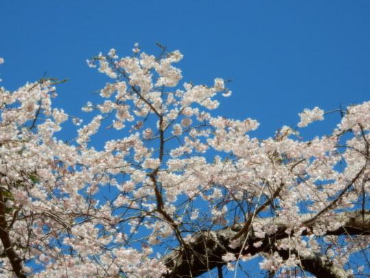 すっかり春だった_e0355177_12163479.jpg
