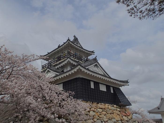 サクラと浜松城。_c0197578_10201461.jpg