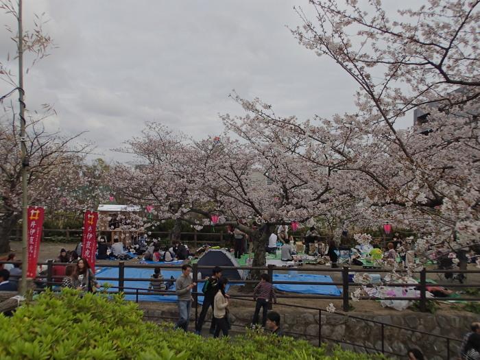 サクラと浜松城。_c0197578_1033036.jpg