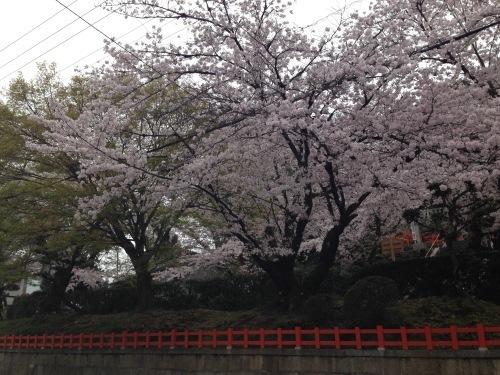 春爛漫_f0347891_21582553.jpeg