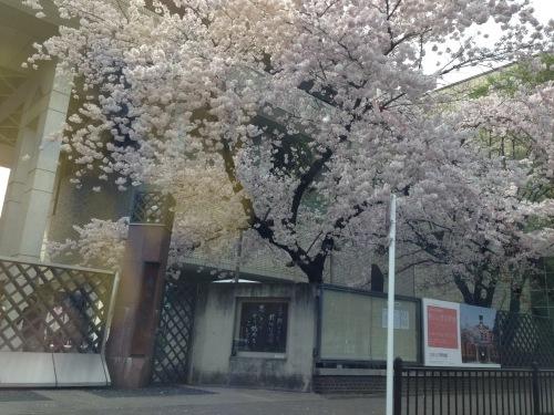 春爛漫_f0347891_22065015.jpeg