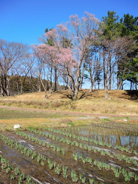 史跡多賀城をぐるっと一周_f0100593_16130781.jpg