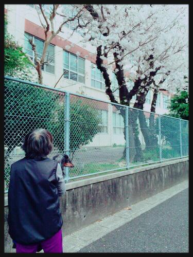 見納め桜★_e0123401_18162261.jpg