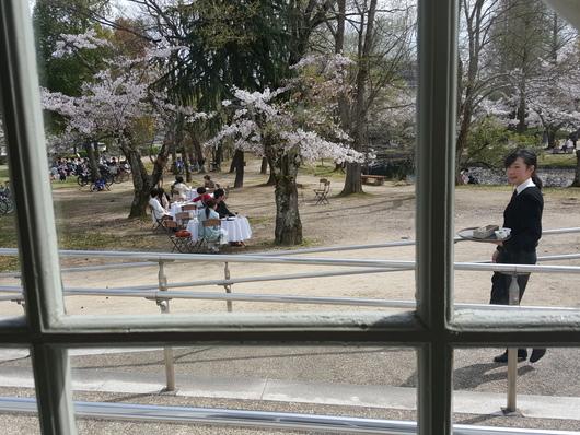 キューティーパイクラブのお花見ランチ_b0122805_1912782.jpg
