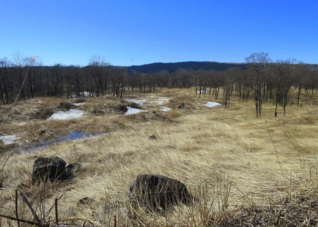 加速し始めた~3  鳥海山麓 ・冬師(トオシ)湿原 その2_a0214206_15275192.jpg